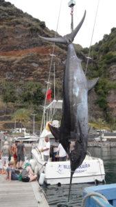 Blue Marlin Weltmeister