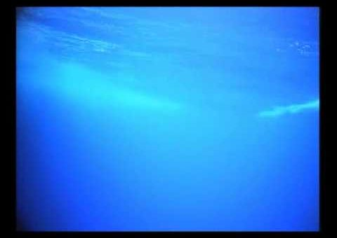 Under water footage of a blue marlin