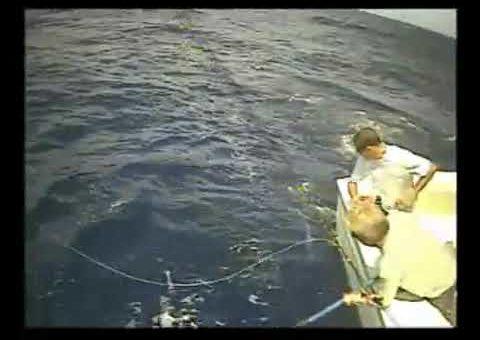 """Madeira Marlin on board the """"grander"""""""
