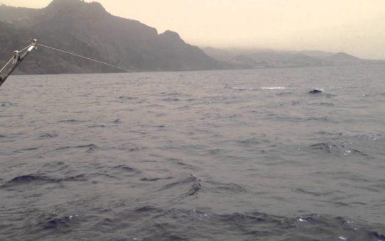 Blue Marlin Fishing on the Balancal - Palheiro Estate