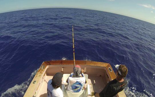 Madeira island marlin fishing